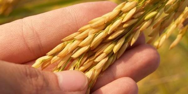 vocabulary_food crops